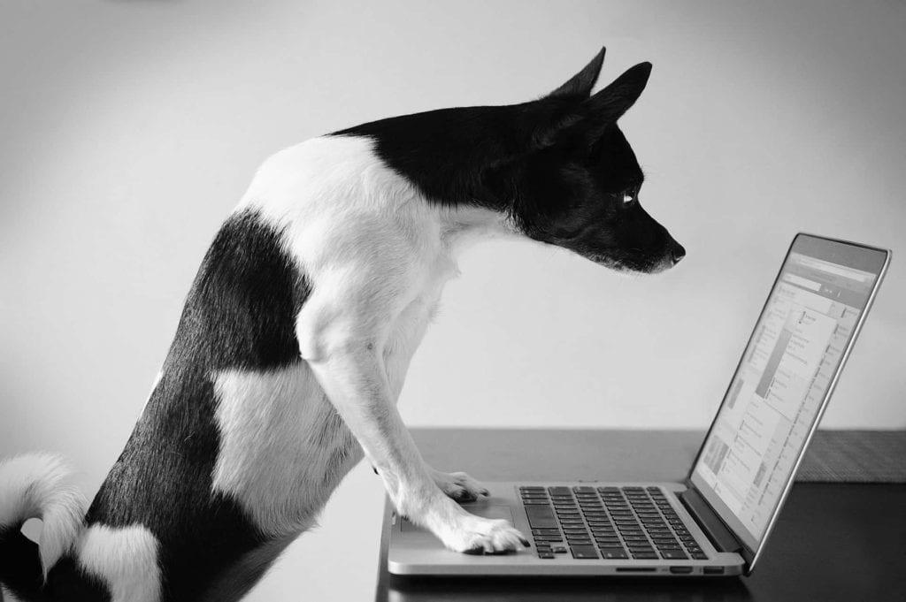 אפליקציות לבעלי כלבים